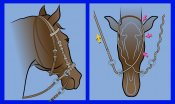 bitless bridle whole head hug concept